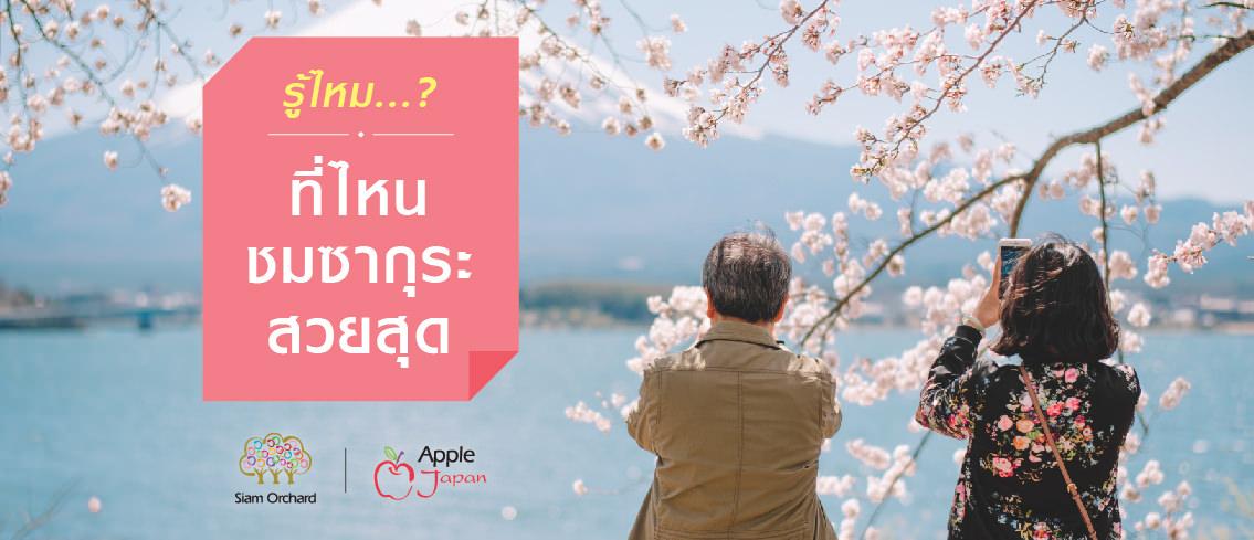 บทความ รู้ไหม..ที่ไหนชมซากุระสวยสุด