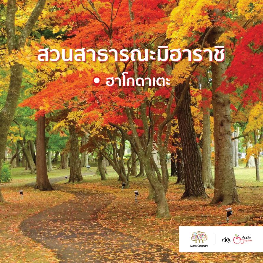 #SiamOrchardGroup #ผู้ช่วยที่ดีที่สุดด้านการท่องเที่ยว #AppleJapan #Autumn #จุดชมใบไม้เปลี่ยนสีที่ฮอกไกโด #ทัวร์ญี่ปุ่น #ทัวร์ใบไม้เปลี่ยนสี
