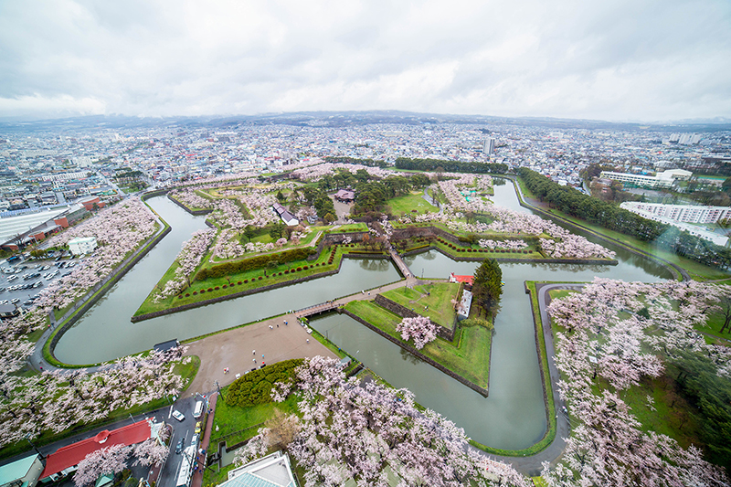 Cherry Blossom Hakodate Garden Near Goryokaku Tower .