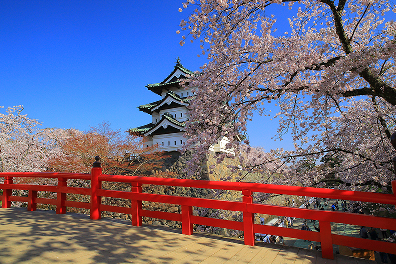 54241519 Aomori Hirosaki Cherry Blossom Festival