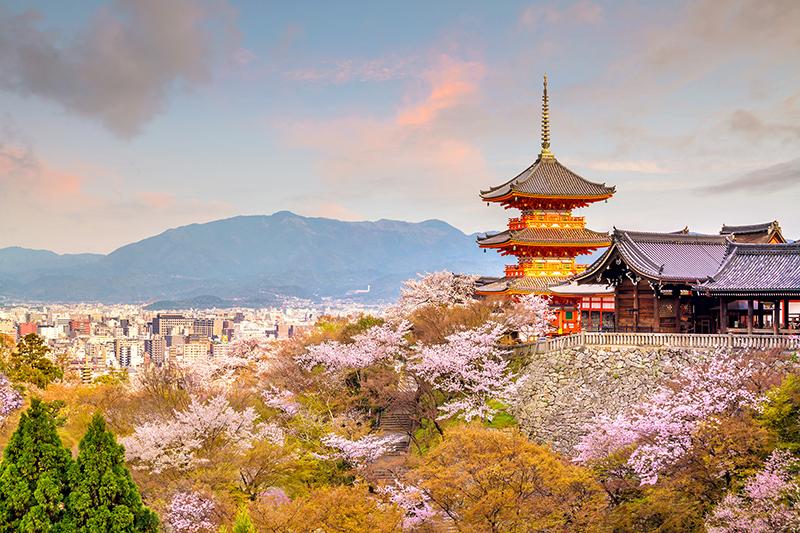 Kiyomizu Dera Temple And Cherry Blossom Season (sakura) Spring T