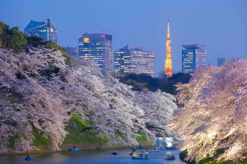 69 Chidorigafuchi Tokyo Tower Sakura